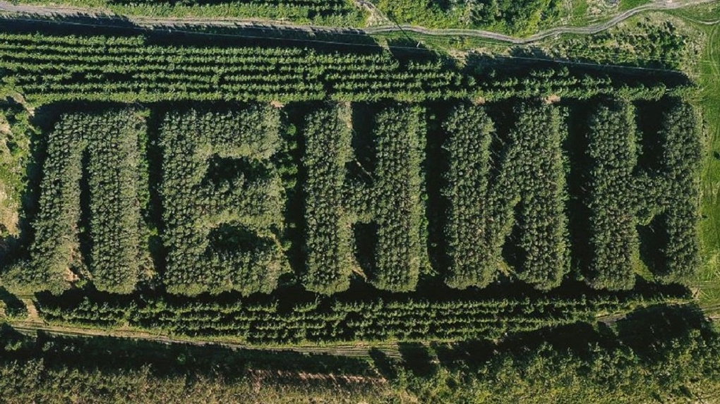 Ей уже 50 лет! Новосибирский фотограф сверху снял огромную надпись «Ленин», сделанную из сосен и елей