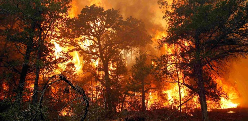 В леса Омской области пришло опасное природное явление
