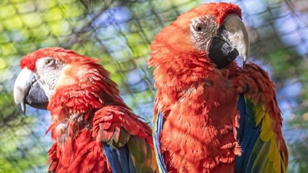 Клювы замотаны скотчем: в Новосибирском зоопарке рассказали страшные истории про попугаев