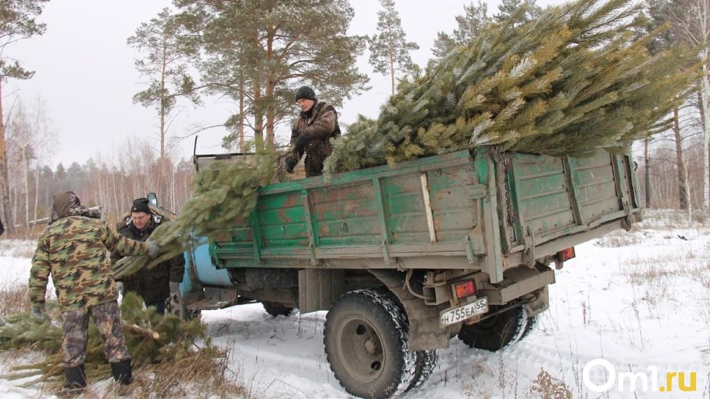 Стало известно, откуда привозят новогодние ёлки для омичей