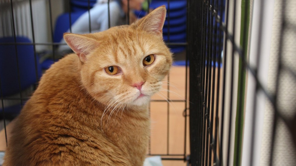 «День Хвоста» в городе: в конце ноября новосибирцы смогут бесплатно обзавестись кошками и собаками