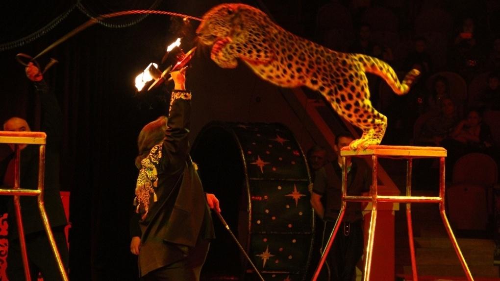 В Омском цирке покажут новогоднюю сказку с медведями и леопардами