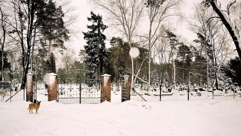 Омичка пожаловалась на состояние могилы омского поэта