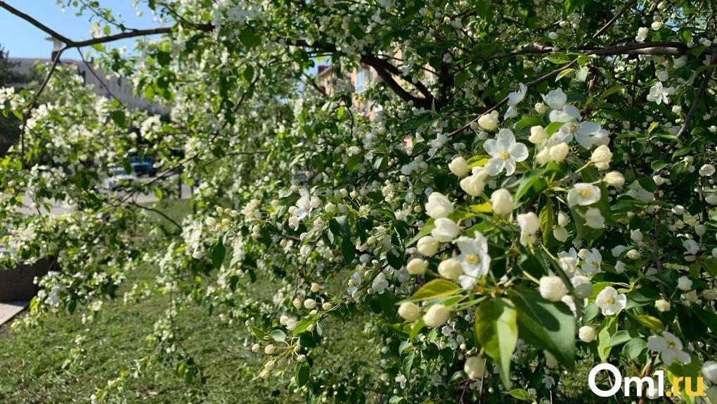 На майских выходных в Омск придет аномальное лето