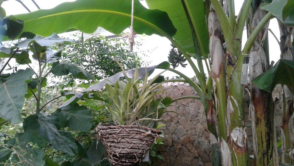 Омские школьники выращивают ягоды на деревьях