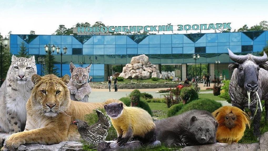 Андрей Травников распорядился выделить деньги на помощь Новосибирскому зоопарку