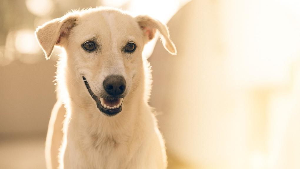 В Омске преданная собака никого не подпускает к своей сбитой подруге
