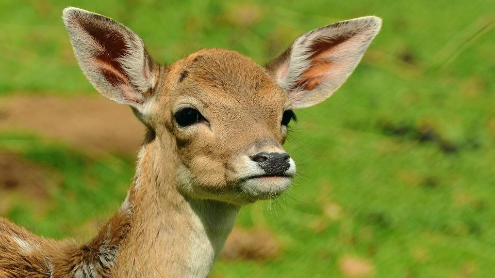 В Омске троих родственников подозревают в браконьерстве