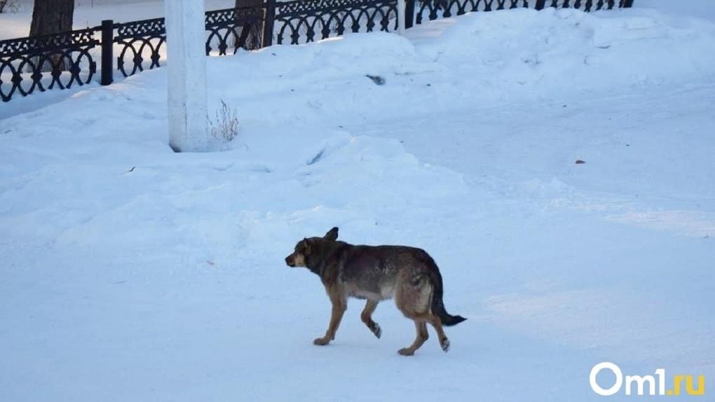 Сотни трупов: стало известно, сколько бродячих собак в Омске в этом году уничтожат «по плану»