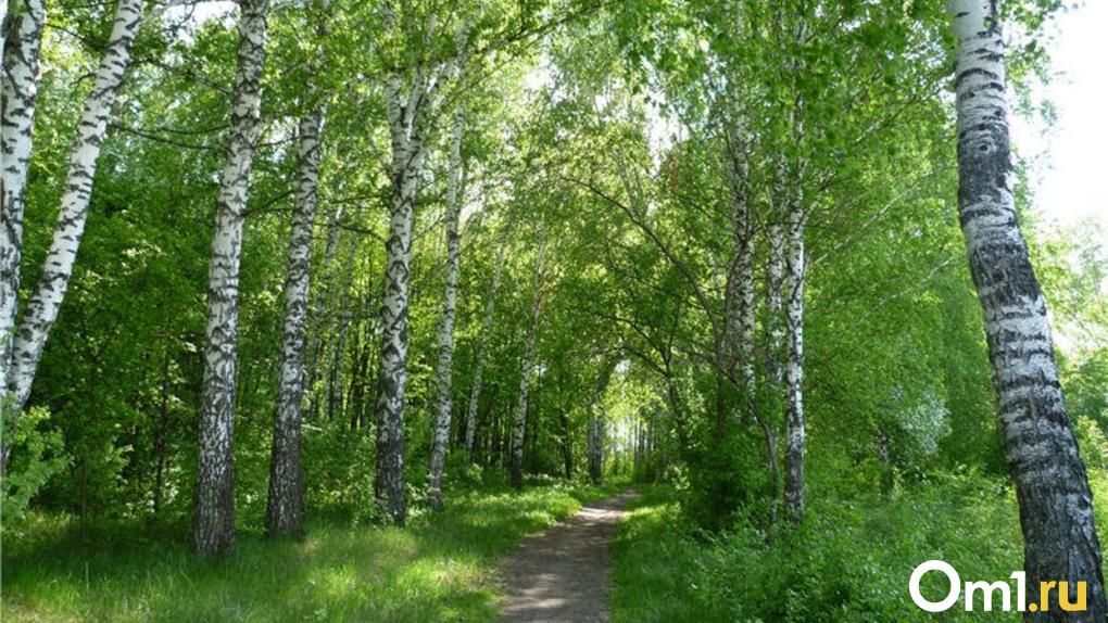 Шашлыки в лесу могут обойтись омичам в полмиллиона рублей