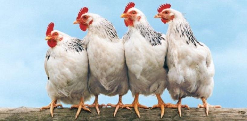 Вместе с перелетными птицами в Омскую область может попасть птичий грипп