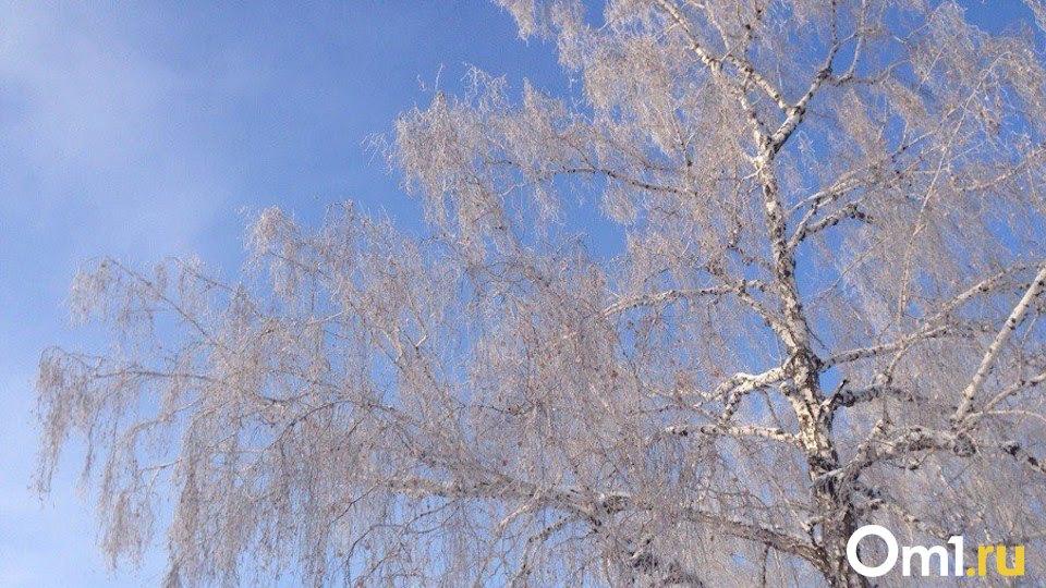 Морозную неделю до — 18 градусов прогнозируют новосибирские синоптики