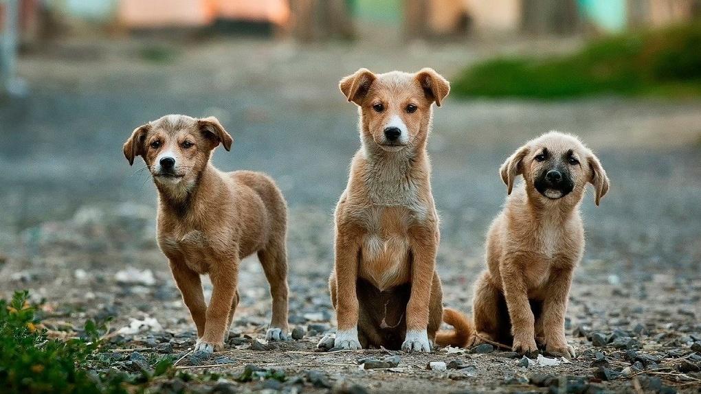 По территории омской школы свободно прогуливается стая бездомных псов