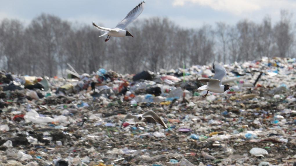 Министр ЖКХ опроверг информацию о строительстве мусорного полигона под Новосибирском