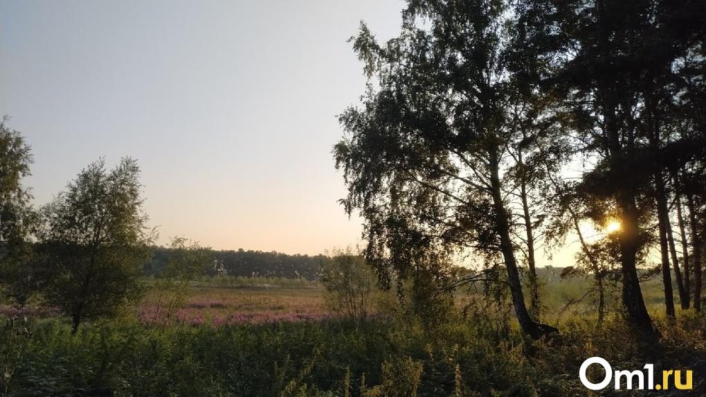 В Омскую область снова возвращается бабье лето
