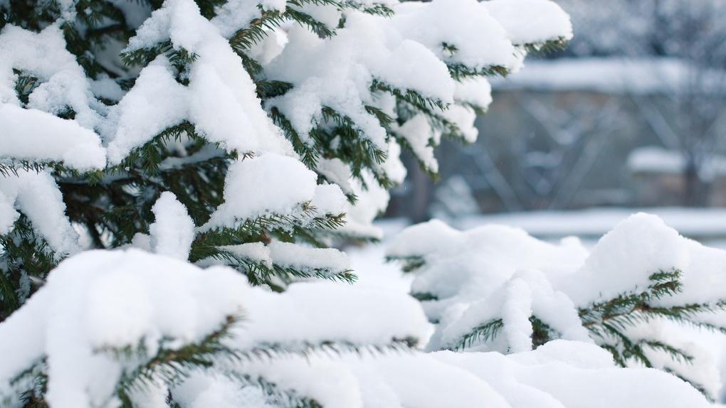 Стало известно, сколько омичей попались на незаконной рубке елок к Новому году