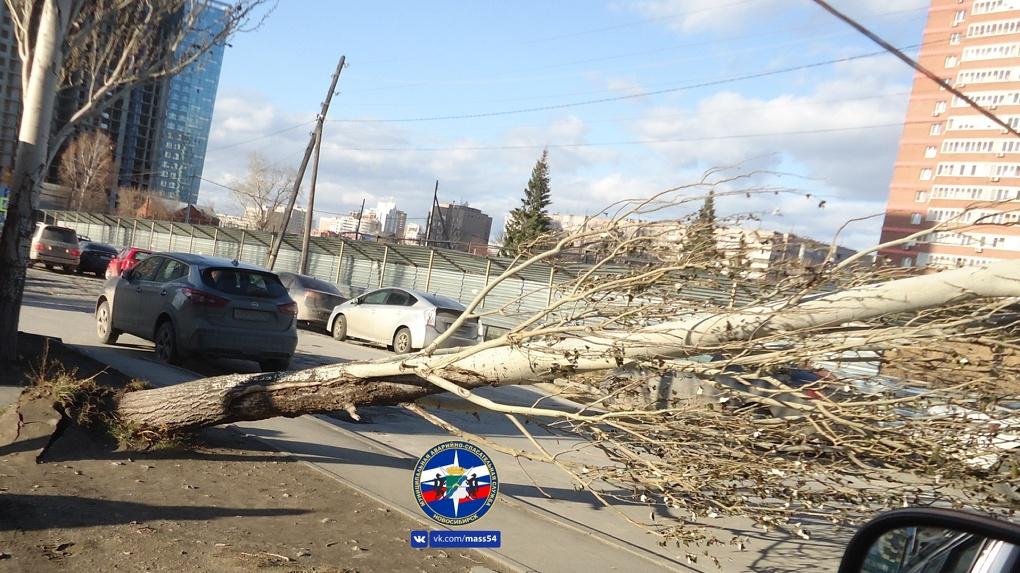 В Новосибирске упавшие от порыва ветра деревья преградили путь автовладельцам