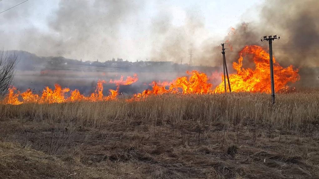 Татьяна Вижевитова обвинила министра сельского хозяйства в возникновении лесных пожаров