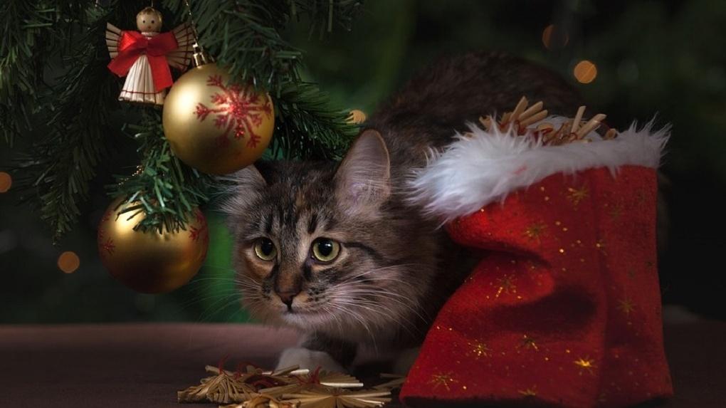 Стало известно, где в Омске установят главную новогоднюю елку