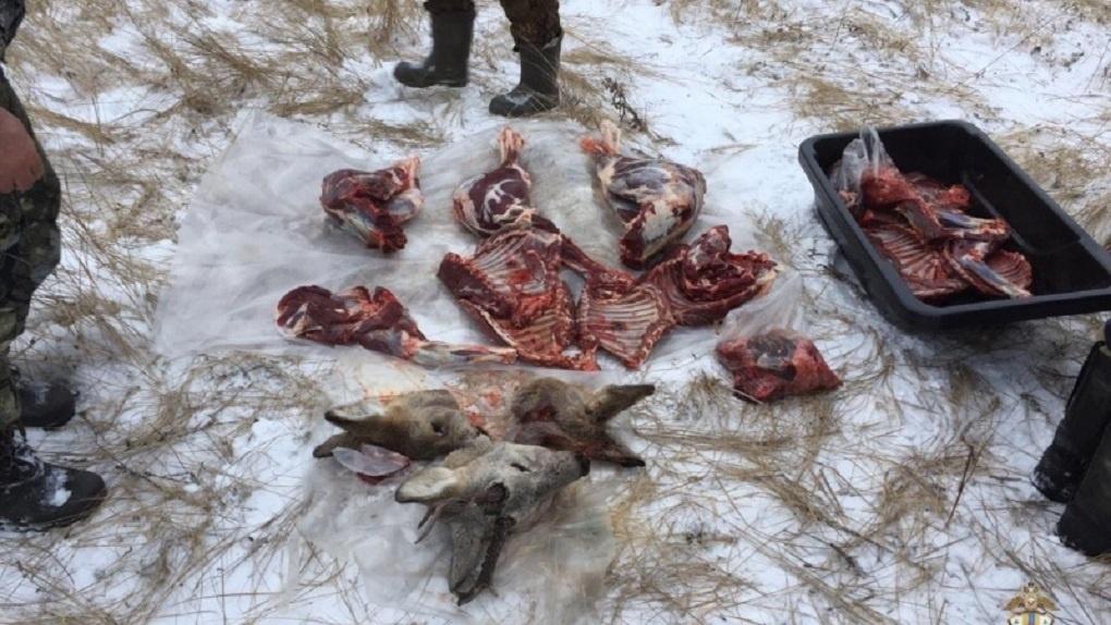 В Омской области поймали трёх мужчин с трупами животных в машине