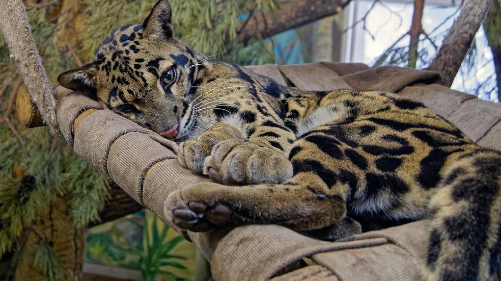 Семь трогательных снимков: в Новосибирском зоопарке показали, как животные принимают солнечные ванны