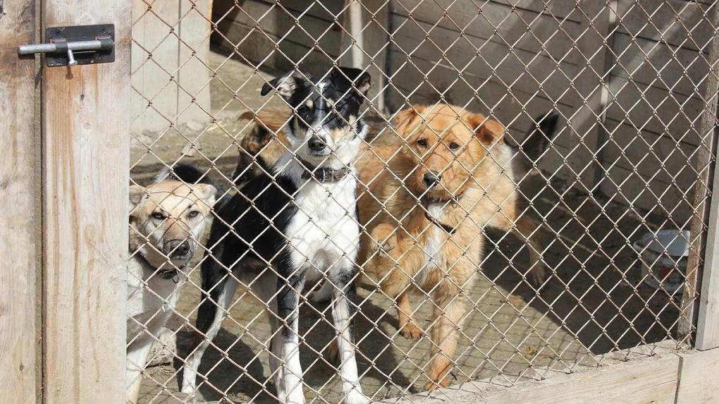 Новосибирцев призывают спасти от голода более 400 бездомных животных