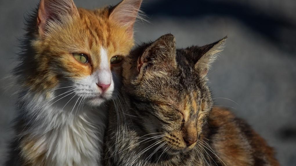 Новосибирцев приглашают в общественный совет по помощи домашним животным