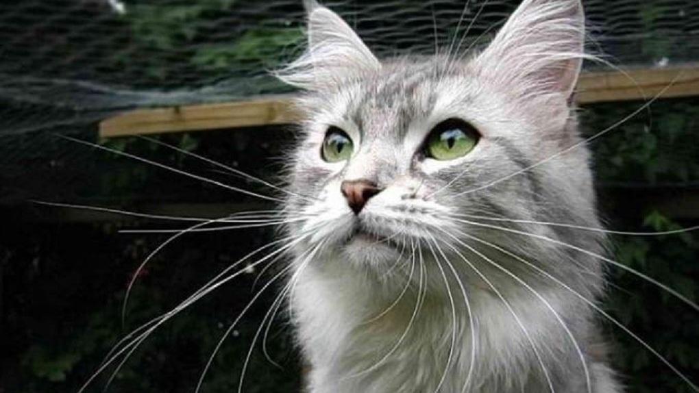 Жительница Новосибирска продаёт кошачьи усы за два миллиона рублей