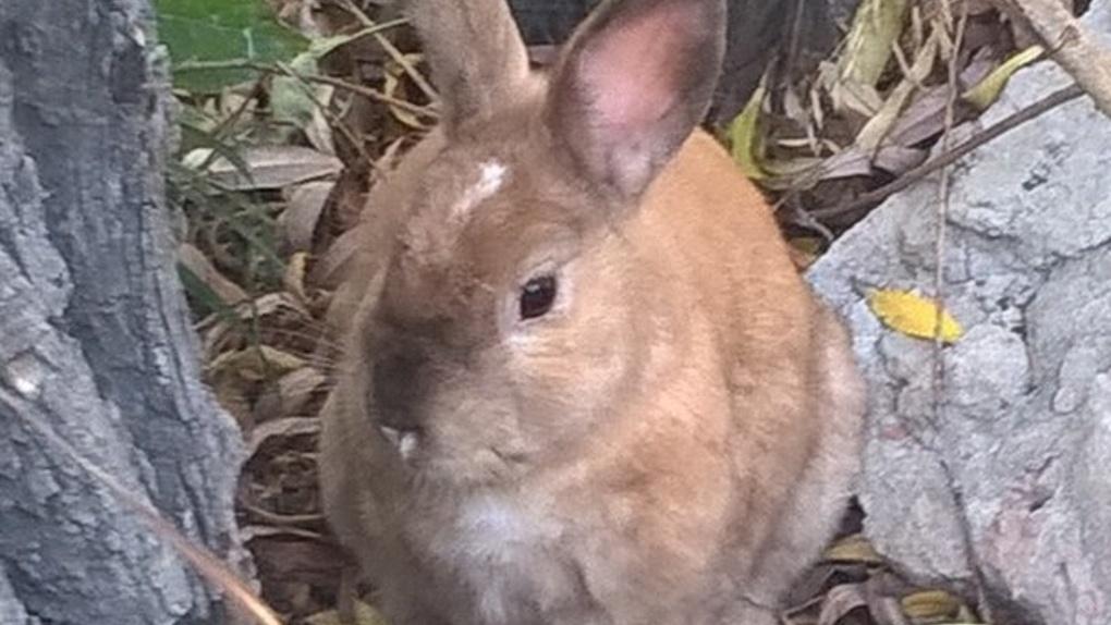 Декоративный кролик поселился в парке «Зеленый остров»