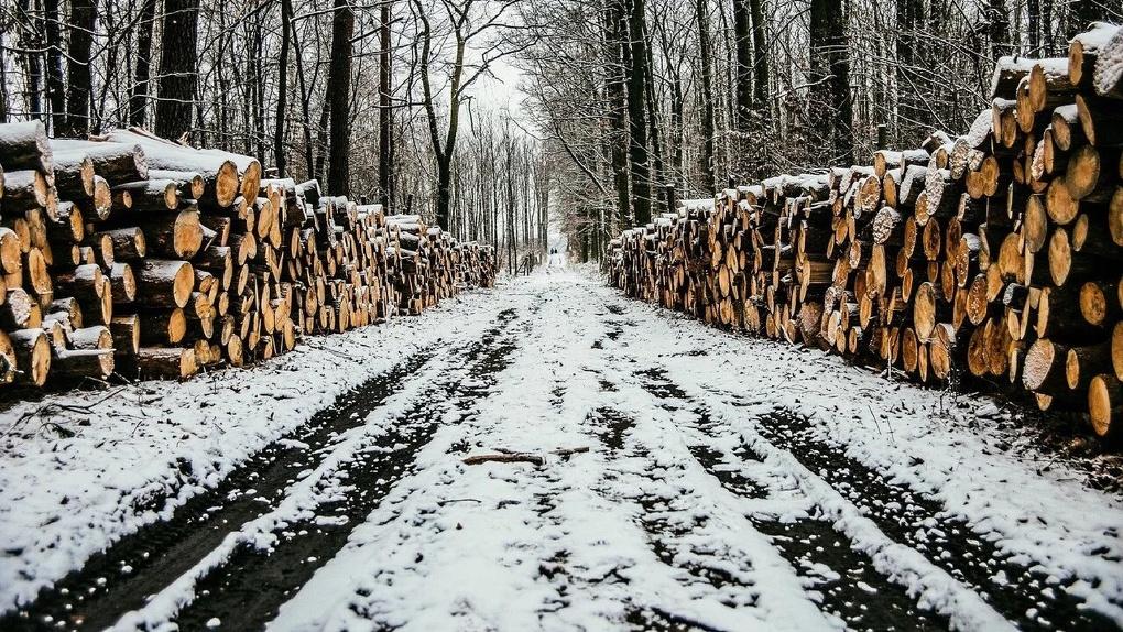 В Омской области чиновники участвовали в незаконной вырубке леса