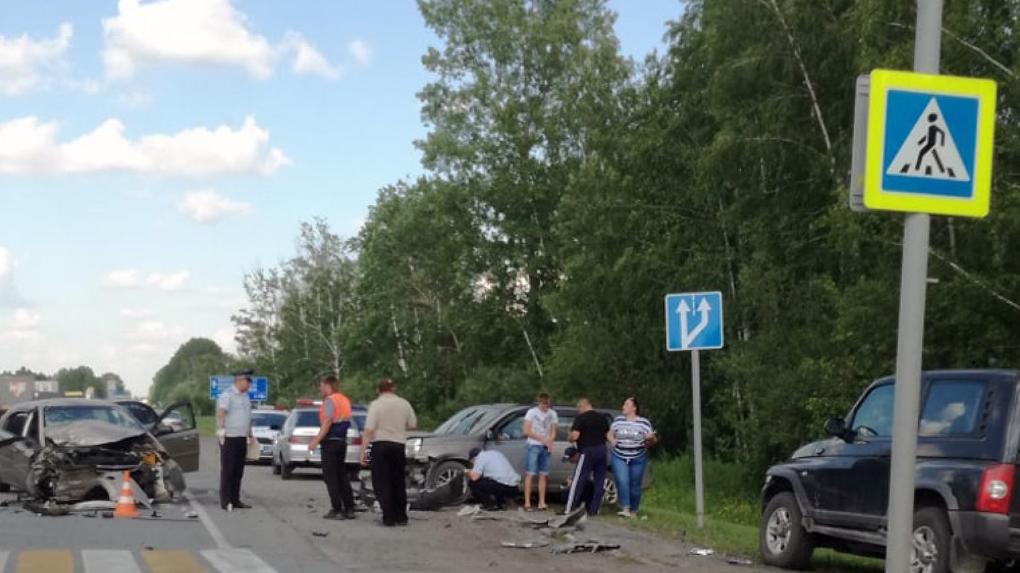 Лось погиб под колесами автомобиля в Новосибирске