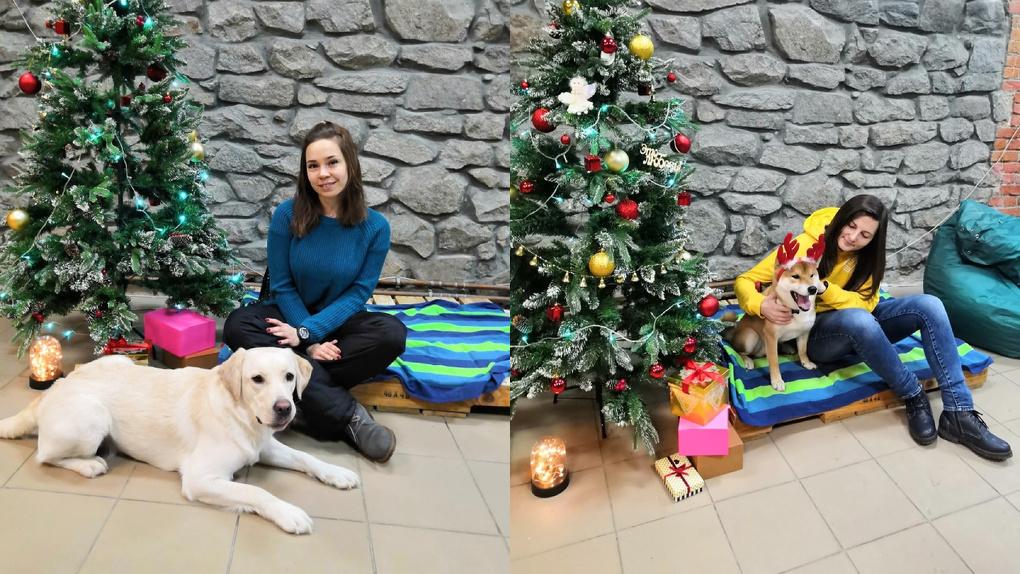 «Сделай яркий снимок с собакой и спаси жизнь»: новосибирцев приглашают на фотосессию