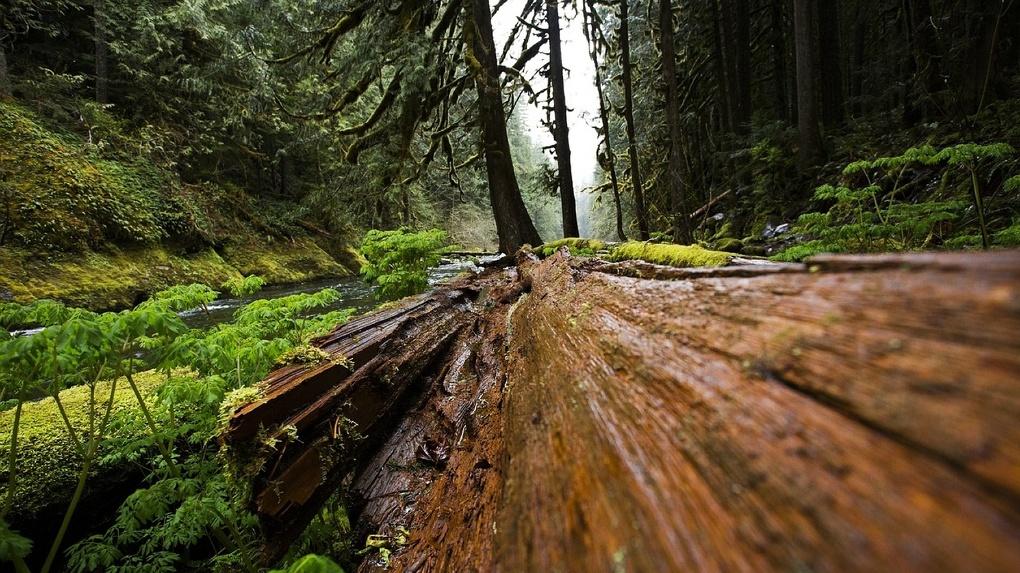 Молодого омича насмерть раздавило упавшее дерево