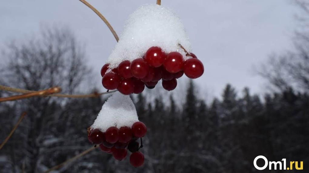 Мороз до — 12 и снегопад: какая погода ждёт новосибирцев на выходных?