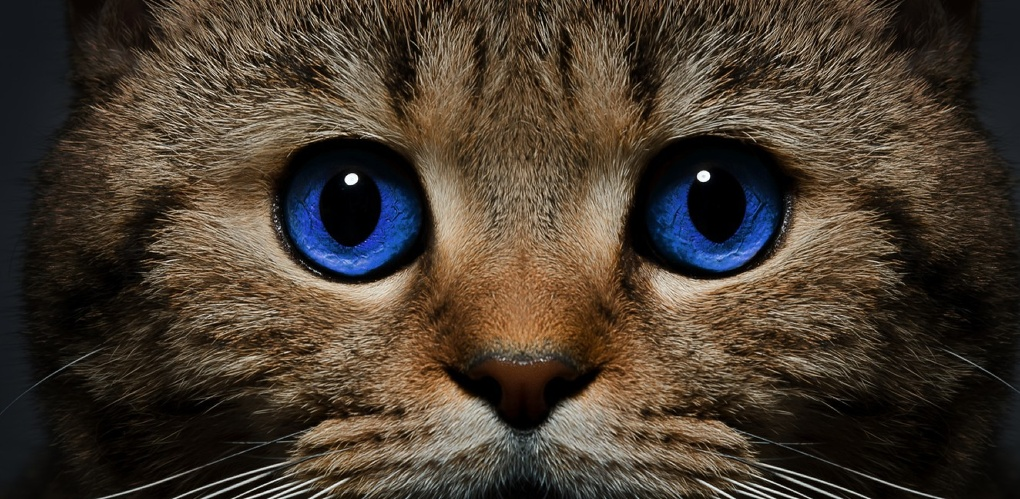 В Омске замуровали в подвале многоэтажного дома бездомных кошек