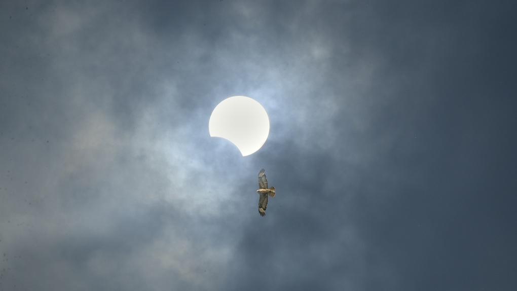 Омичи начали делиться фотографиями вчерашнего затмения