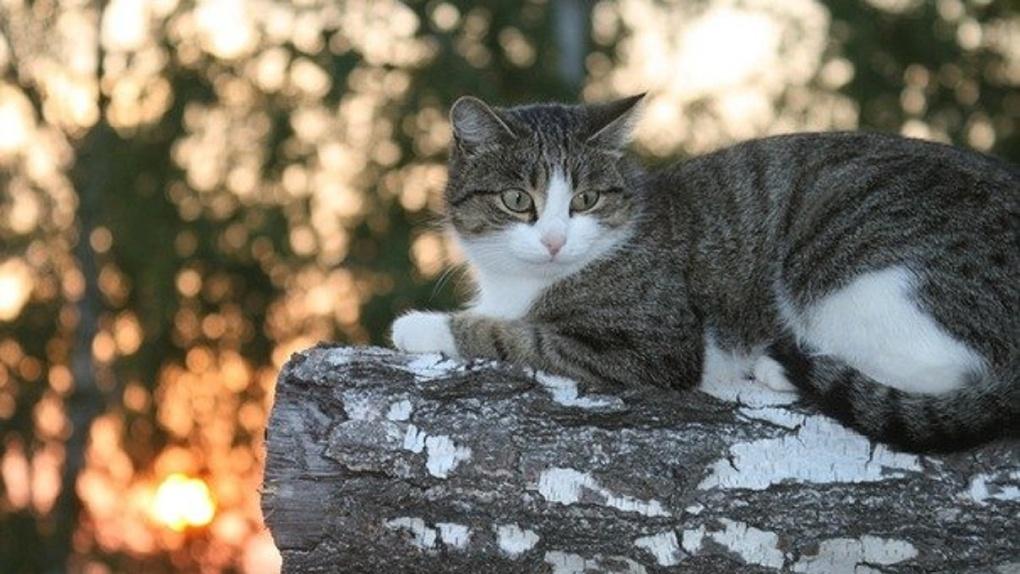 Омский планетарий ищет свою астрономическую кошку