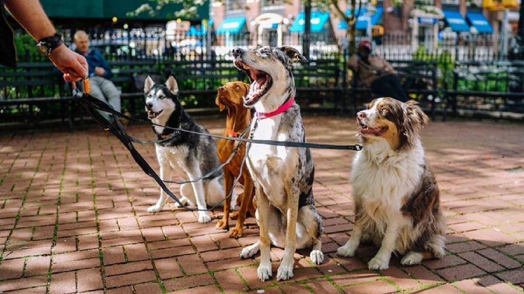 Застройщик отобрал у новосибирцев площадку для выгула собак