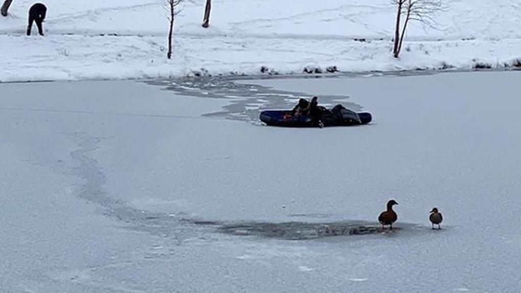 Новосибирцы спасли хромую утку на замерзающем озере