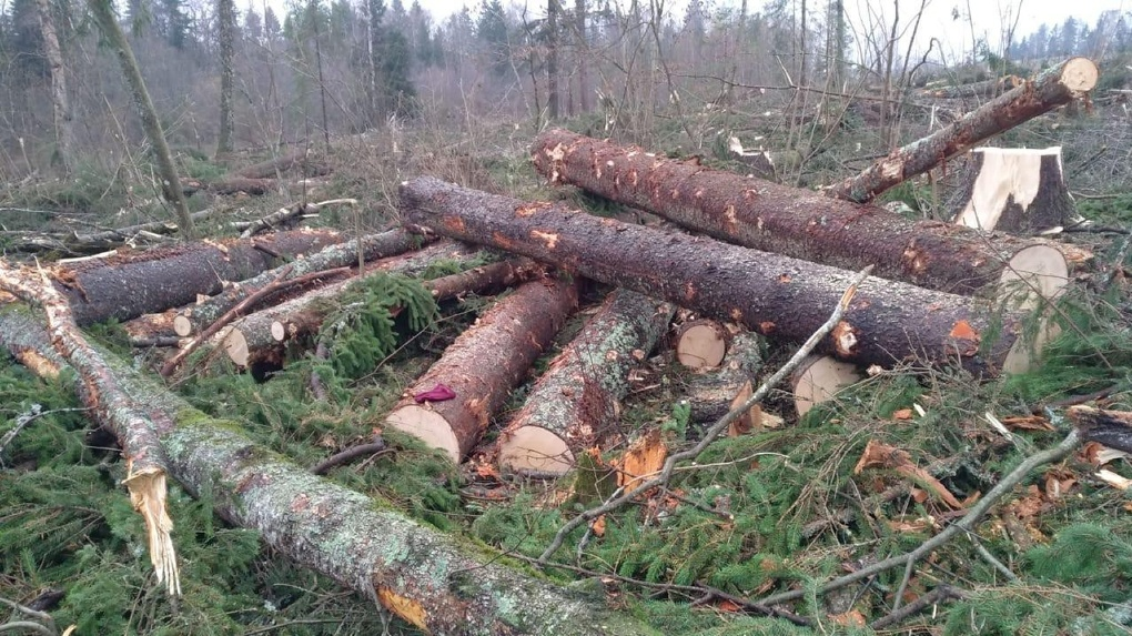 Новосибирский лесной фонд спасают от пожаров и вырубки