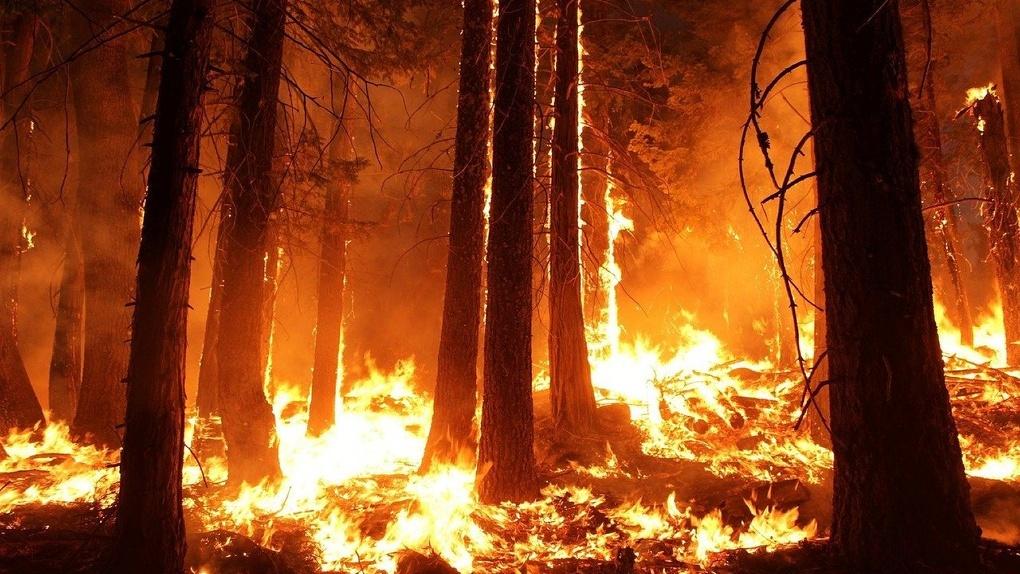 За выгоревшие леса и поля омичи заплатили 80 тысяч рублей штрафов
