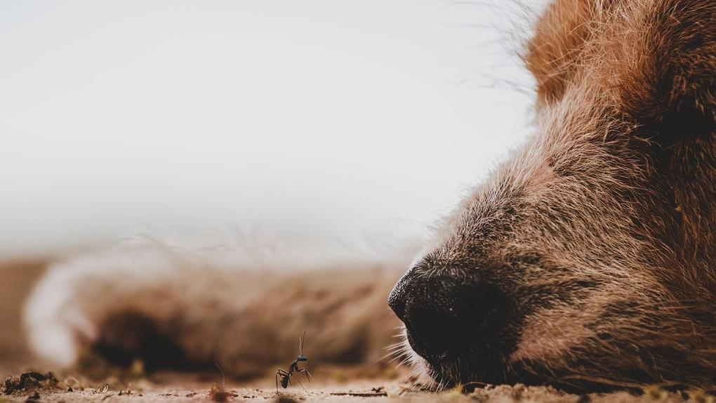 Омская полиция не увидела преступления в зверском расчленении щенка, которого сварили на холодец