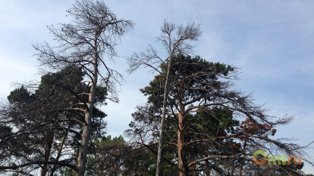 В Омской области намерены провести инвентаризацию леса
