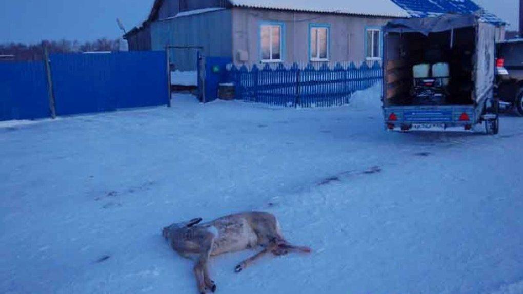 В Омской области браконьера будут судить за убийство двух косуль