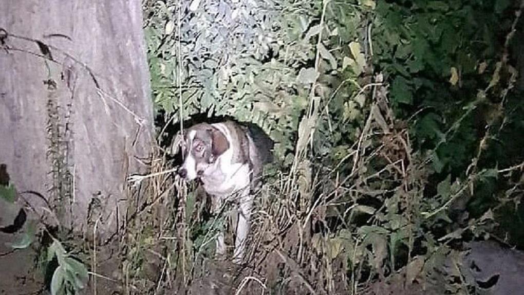 Под Новосибирском живодёр прострелил собаке шею из лука