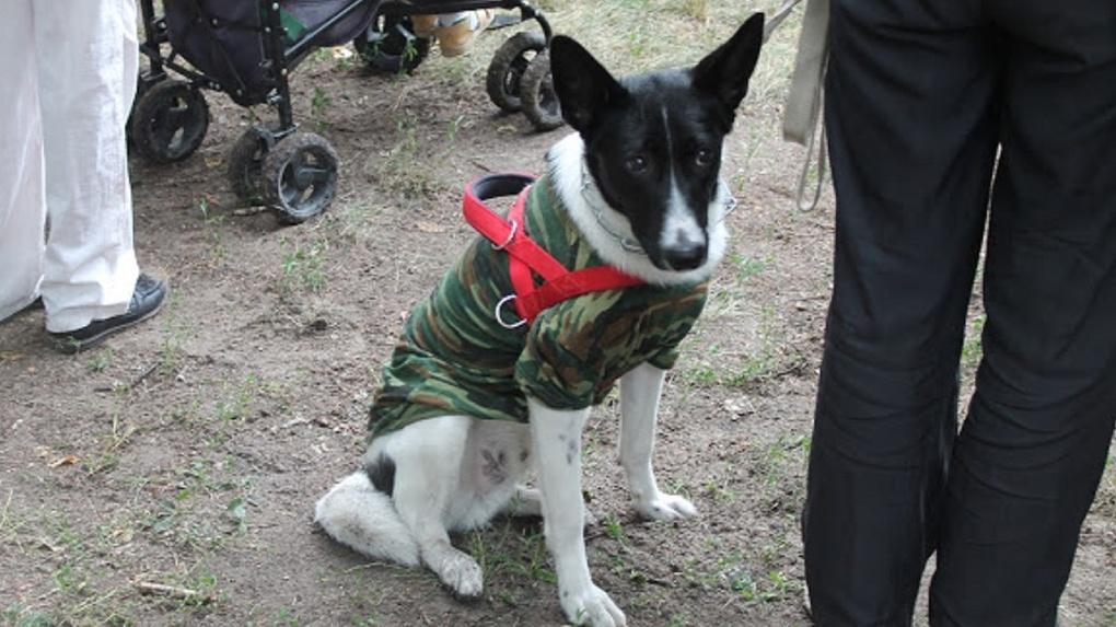 В Омске появится еще одно место, где можно будет выгуливать и дрессировать собак