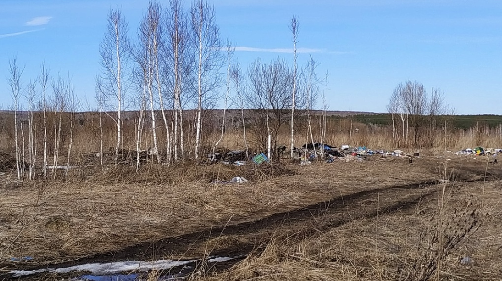 «Растения из Красной книги тонут в мусоре»: свалка в посёлке Новосибирской области возмутила жителей