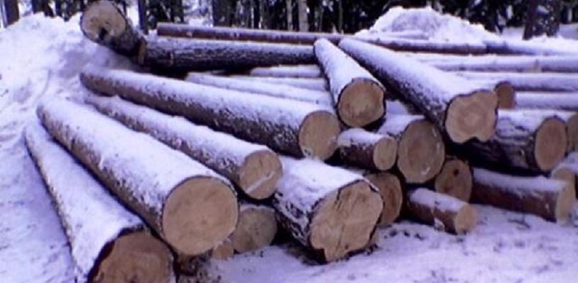 В Омской области лесоруба насмерть задавило упавшим деревом