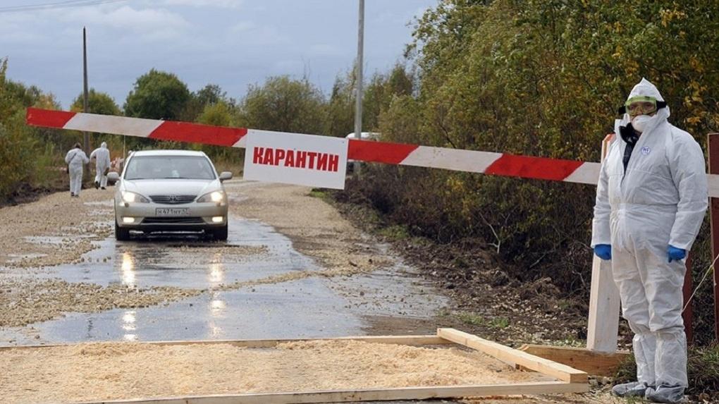Глава омского Минсельхоза Чекусов объяснил, почему ушел в отпуск во время вспышки АЧС