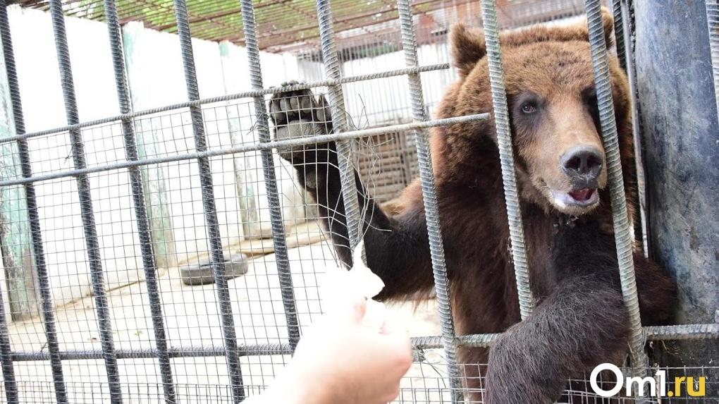 В Омской области готовят к открытию музеи и зоопарки